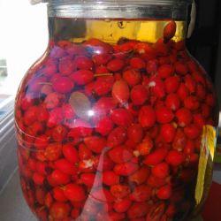 Owoce dzikiej róży zalana alkoholem w balonie 5 L