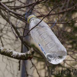 Butelka podwieszona na gałęzi do której kapie sok z brzozy.